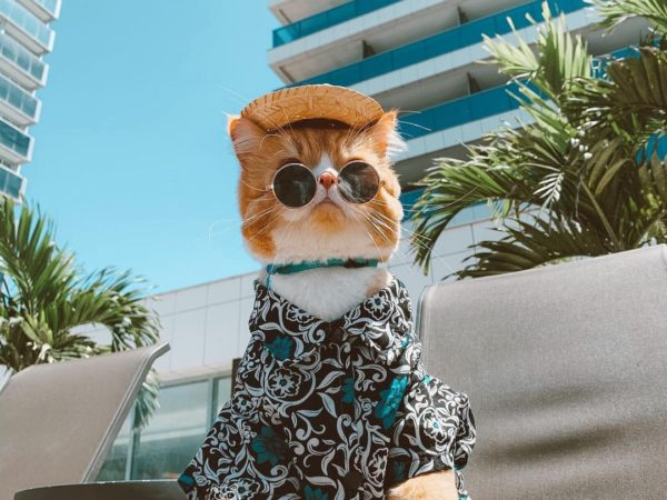 Pet Friendly - ravioliogato-2